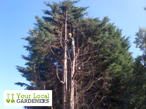 Experienced tree surgeons located in Walthamstow