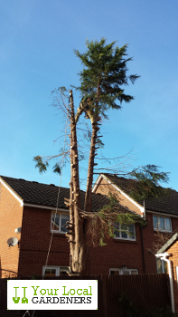 Hire relaible Walthamstow tree surgeons at afforadable price.